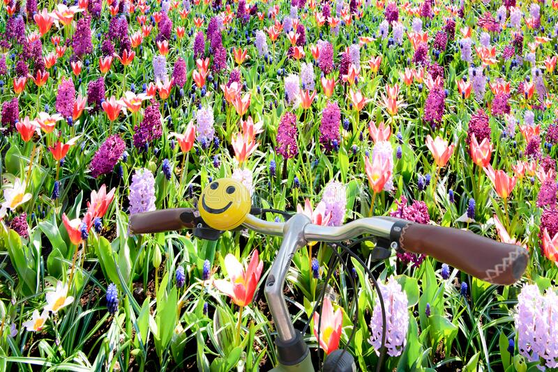 Bicycle handlebar with smily bell parked in colorful spring flowerbed with orange tulips and pink and lilac hyacinths, Netherlands royalty free stock photo