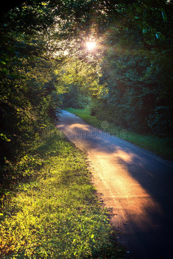 Bike path in a sunny day royalty free stock images