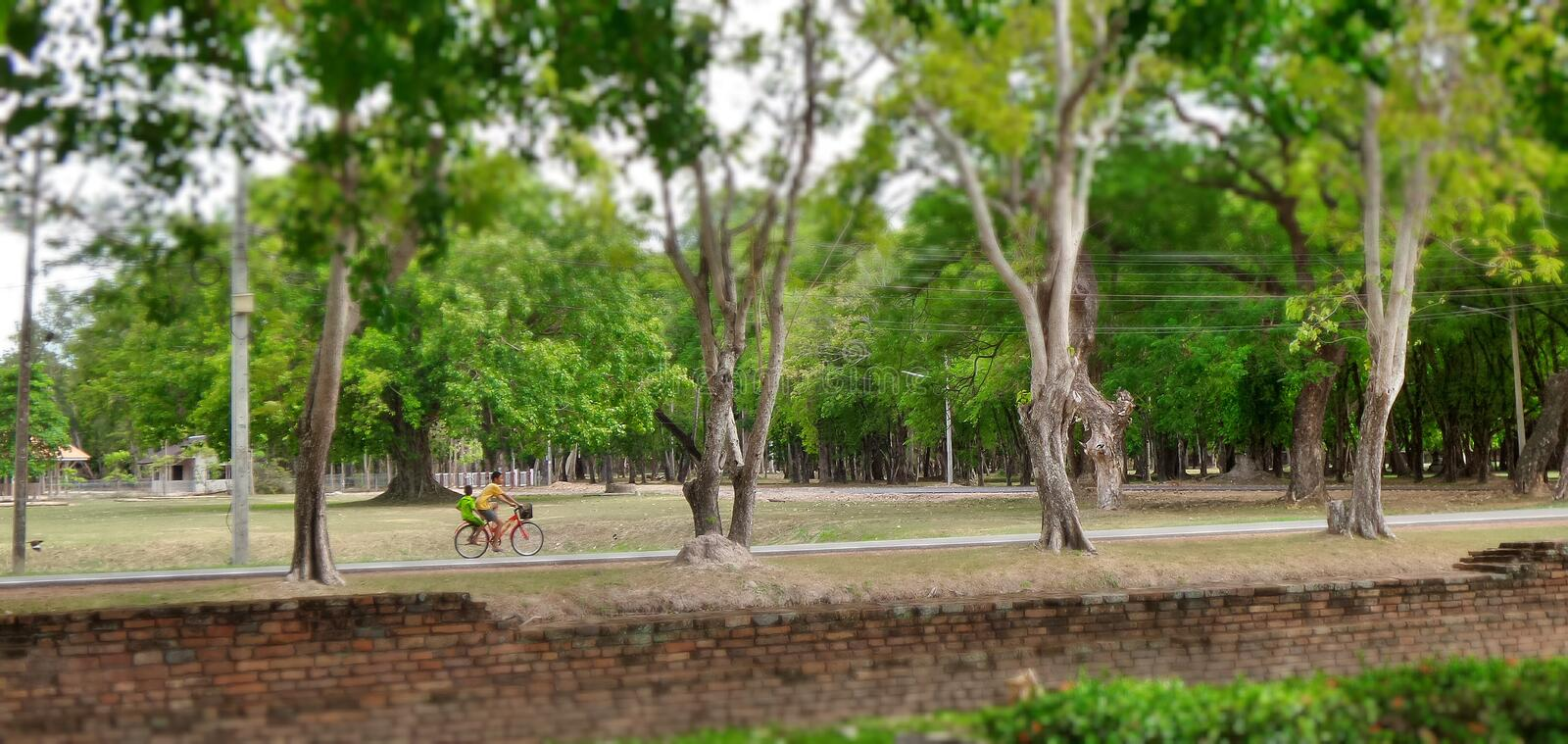 Bike throug the historical park. Boys riding bicycle through greenery in Sukhothai Historical heritage Thailand . Almost every household own a bike since it is stock images