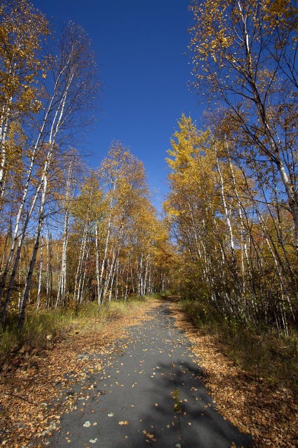Bike Trail in Minnesota royalty free stock photography