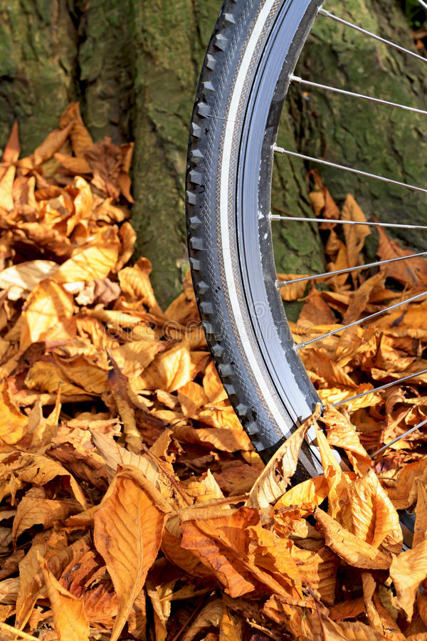 Bike wheel and tire tread with autumn leaves. Close up of mountain bike wheel and tire tread with autumn leaves on the ground against a tree stock images