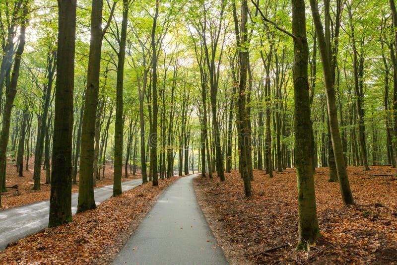 Bikepath genom skogen på Asselsche Heide arkivbilder