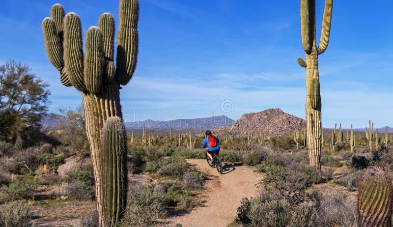 Biker di montagna sul sentiero del deserto in Arizona wioth cactsu fotografie stock