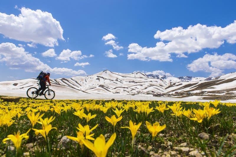 Biker through field of wildflowers. Man on bike on road through field of wildflowers in front of snow covered mountain peaks royalty free stock photos