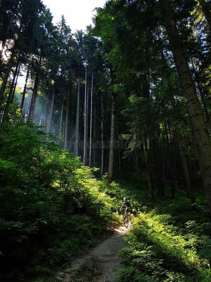Biker na floresta imagens de stock royalty free