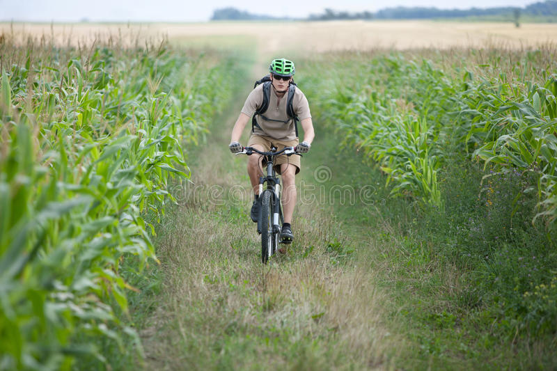 Download Biker riding at cornfield stock image. Image of activity - 18963595