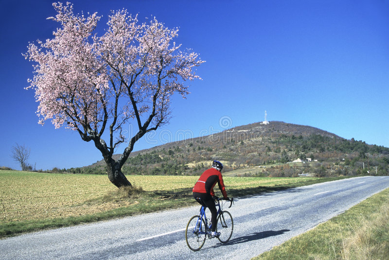 Biker in spring stock photography