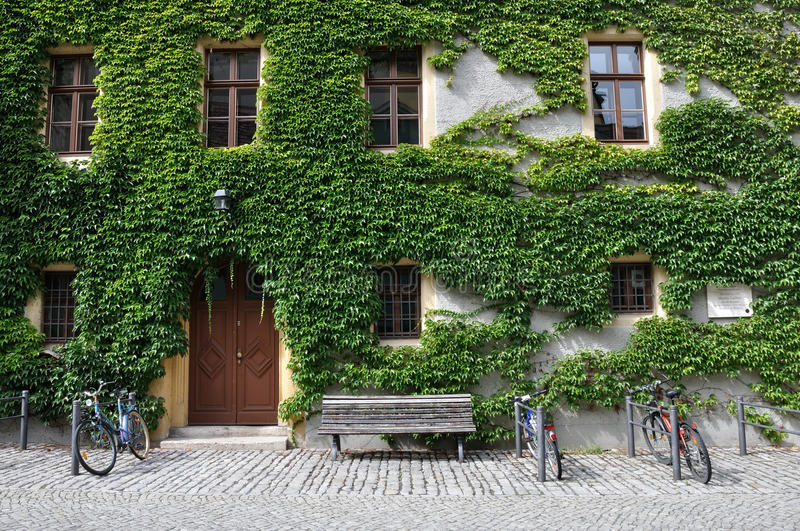 Bikes at lutero's house, weimar. Facade of lutero house covered with ivy, bicycles parked in front royalty free stock images