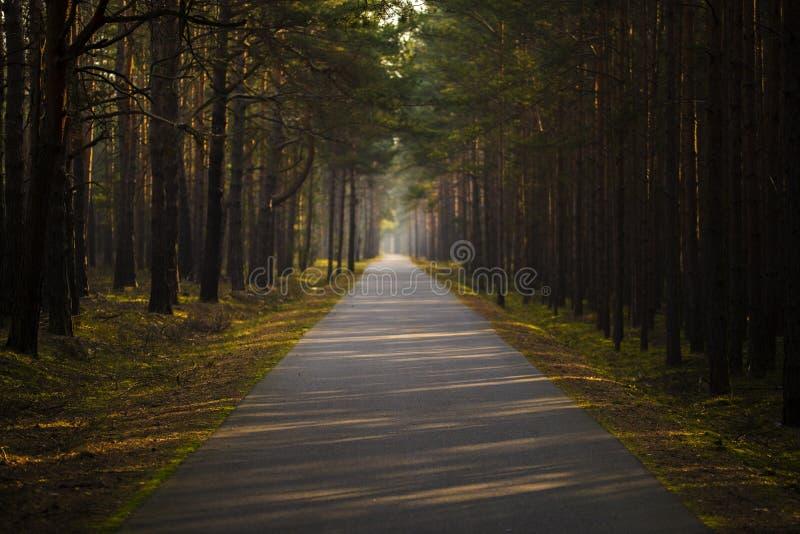 Bikeway在冬天阳光下 免版税库存照片