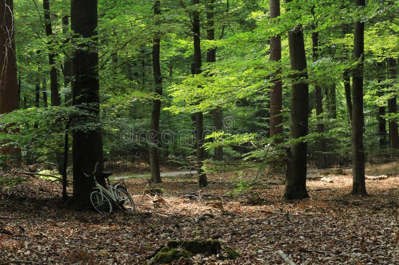 Bike in the middle of the forest stock photos