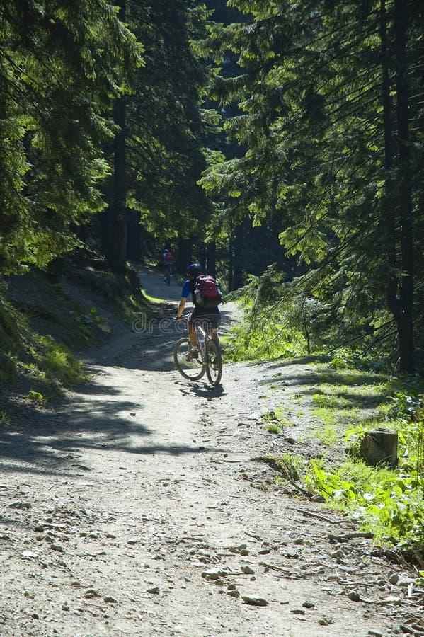 Biking da montanha imagem de stock