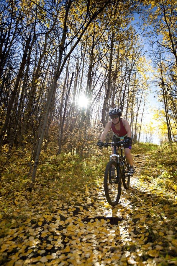 Biking da montanha da mulher foto de stock