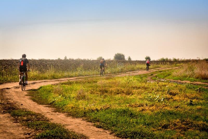 Biking en Rumania, hacia la orilla de Danubio, a través de un campo de maíz del girasol imagen de archivo