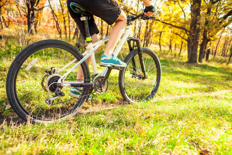 Biking in the forest. royalty free stock photography