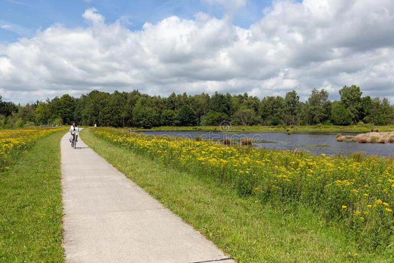 Biking woman in Dutch national park with forest and wetlands stock photos