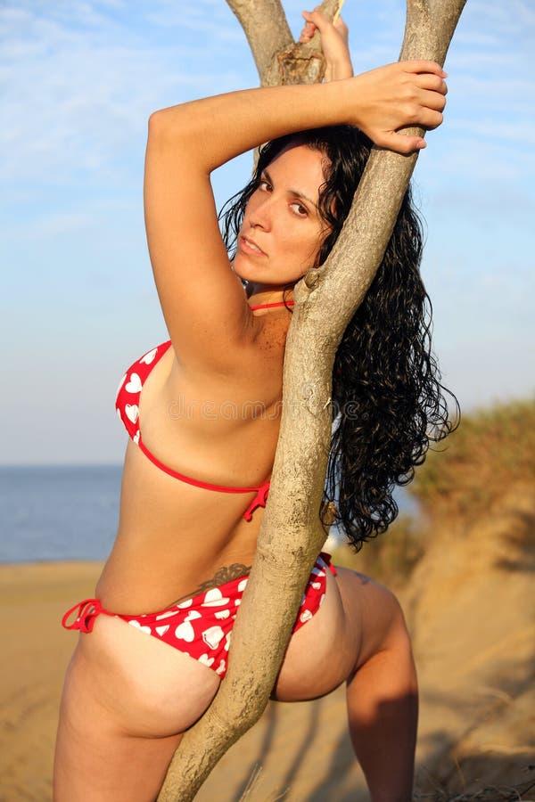 Bikini-Baumuster stockfotografie