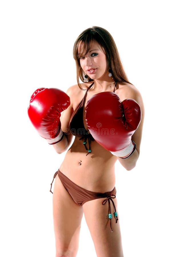 Bikini Boxer1 Royaltyfri Fotografi