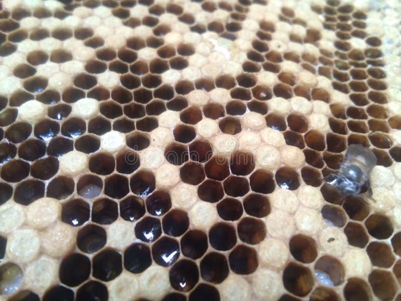 Bikupa med honung royaltyfria bilder