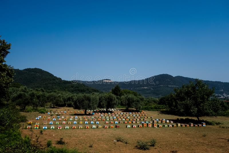 Bikupor på Thasos fotografering för bildbyråer