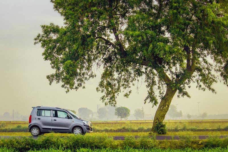 Bil med trädet royaltyfri foto