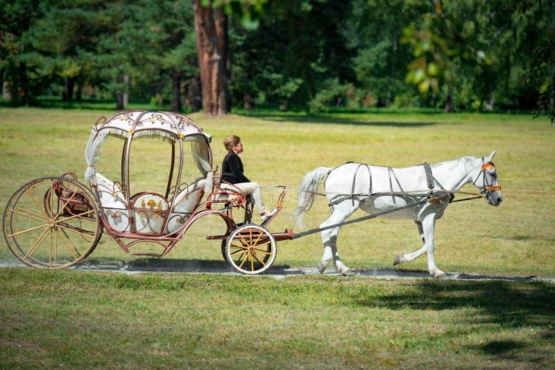 Bila Tserkva, Ucrânia - 2 de setembro de 2017 o transporte de A e um cavalo branco que passa com um verão estacionam fotos de stock royalty free