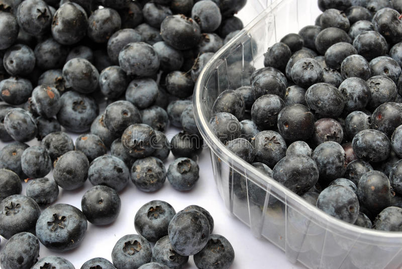 Bilberries. In a plastic pot royalty free stock photos