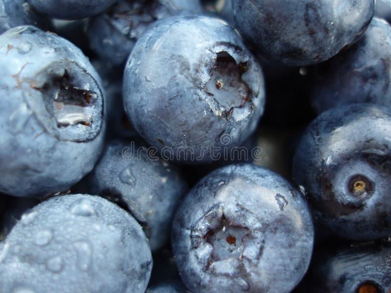 Bilberries Royalty Free Stock Photos
