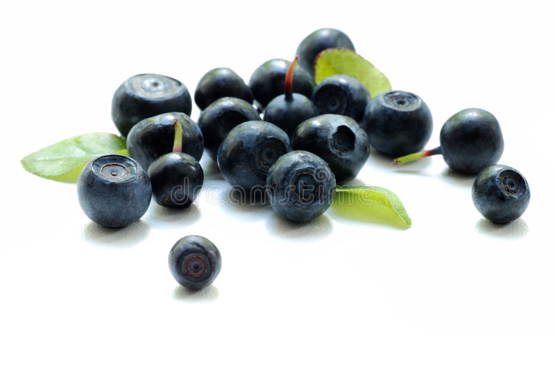 Bilberries. Fresh bilberries on white background royalty free stock images