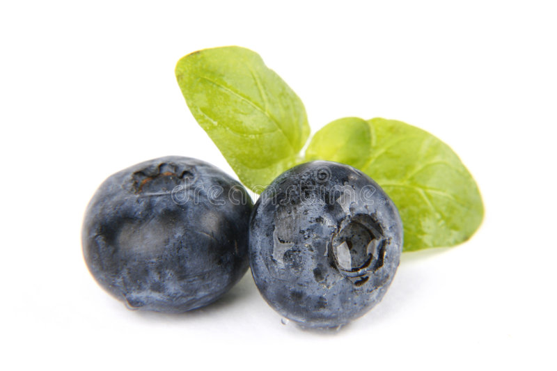 Bilberries. Very fresh and sweet bilberries stock photography
