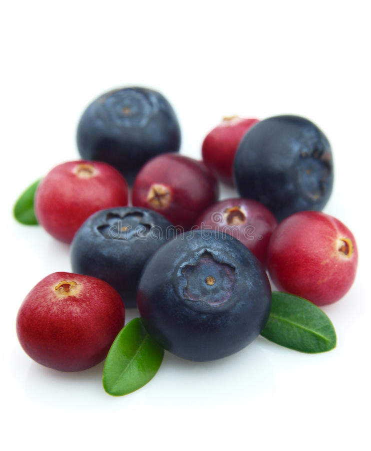 Bilberry and cranberry royalty free stock image