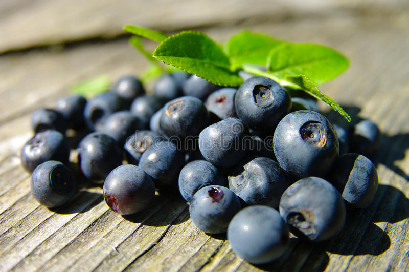 Bilberry. On a wooden background stock photos