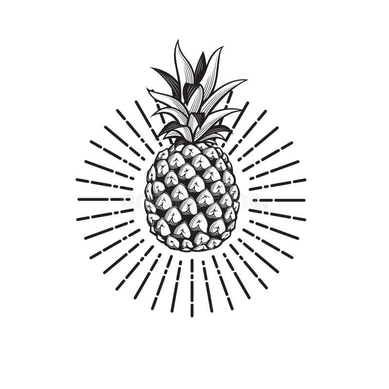Bild av ananasfrukt royaltyfri illustrationer