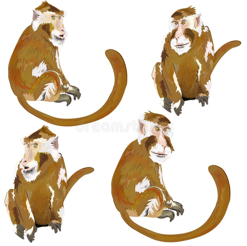 Bild av apan. stock illustrationer