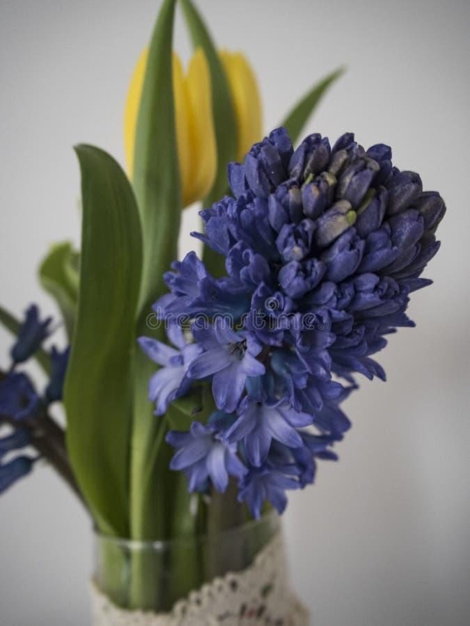 Bild av blåa hyaciths och gula tulpan royaltyfri foto