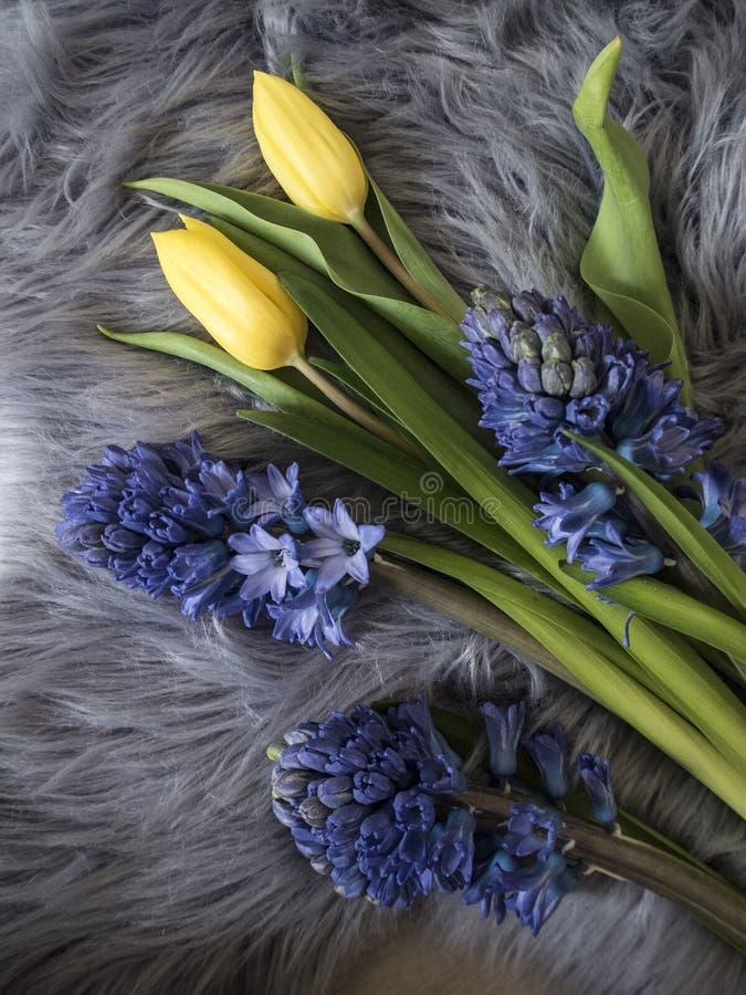 Bild av blåa hyaciths och gula tulpan royaltyfria foton
