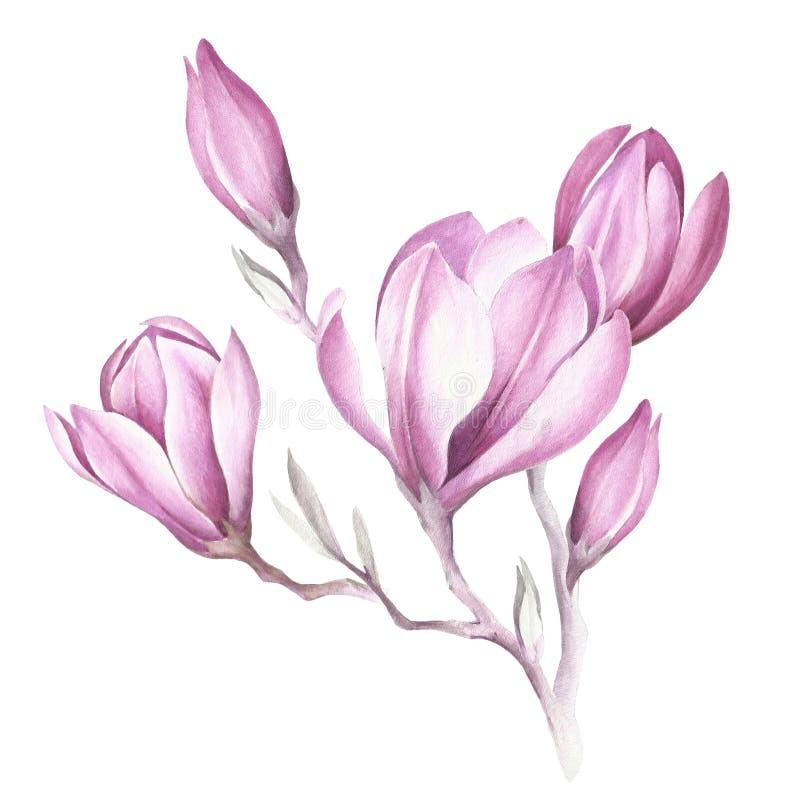 Bild av den blommande magnoliafilialen för flygillustration för näbb dekorativ bild dess paper stycksvalavattenfärg royaltyfri illustrationer