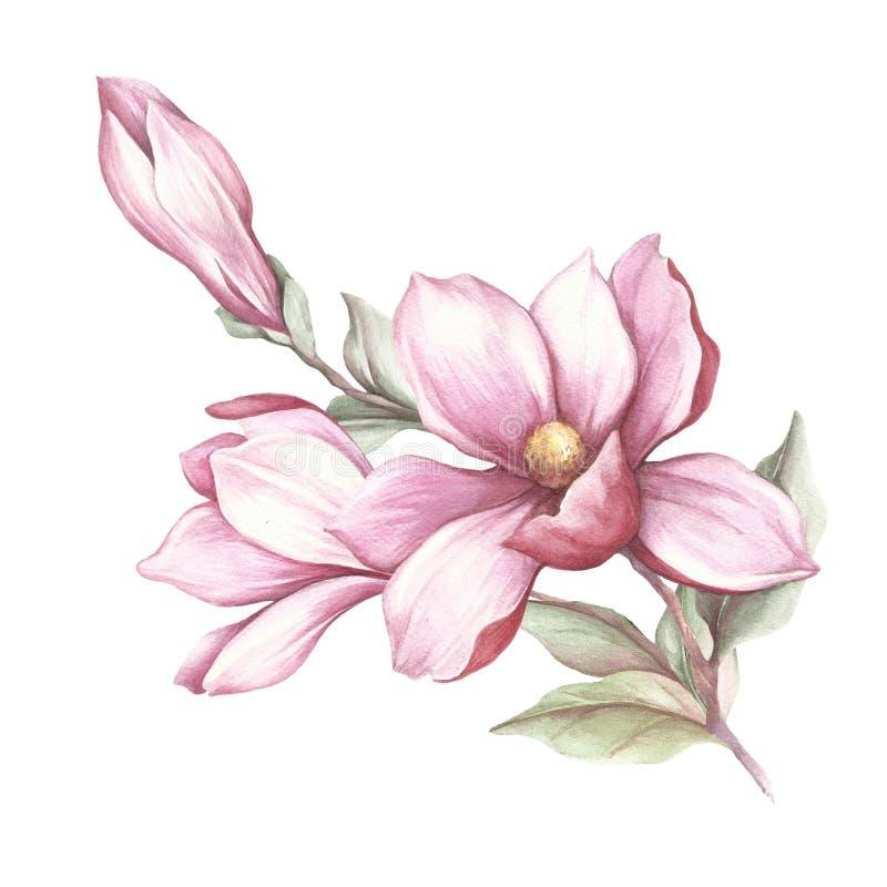 Bild av den blommande magnoliafilialen för flygillustration för näbb dekorativ bild dess paper stycksvalavattenfärg vektor illustrationer