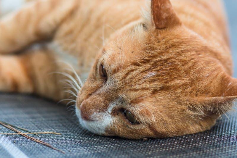 Bild av den ensamma katten som ligger och ser ner att vila på en solloun royaltyfria bilder