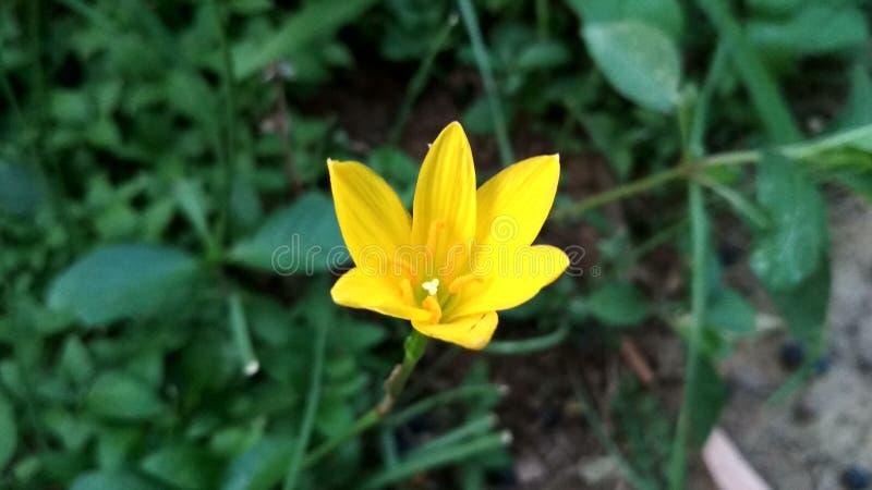 Bild av den härliga gula blomman, unik gul blomma royaltyfri foto