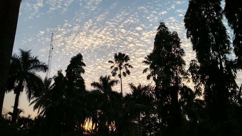 Bild av det härliga trädet och solnedgången arkivfoto