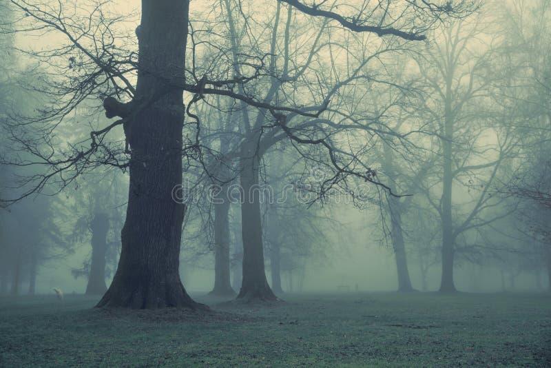 Bild av det jätte- trädet i skogen arkivfoton