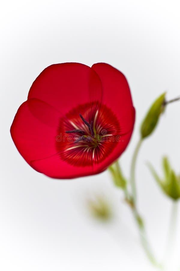 Bild av en blomma royaltyfri foto