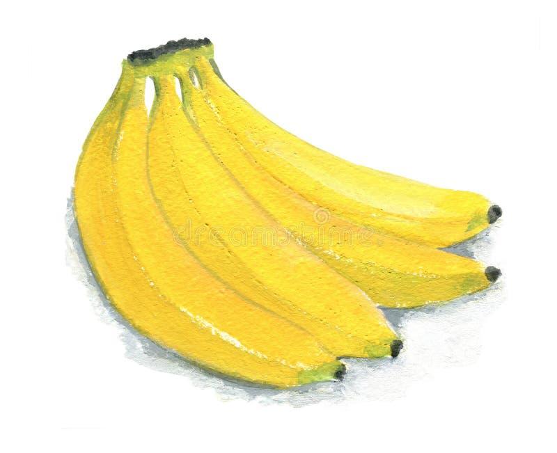 Bild av en grupp av bananer Diagram gouache som isoleras på vit bakgrund vektor illustrationer