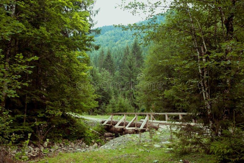 Bild av en lös skog med en bro royaltyfri foto