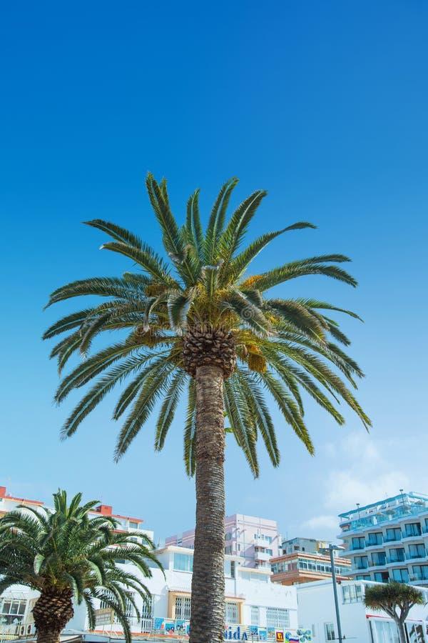 Bild av en palmträd som växer i staden arkivbilder