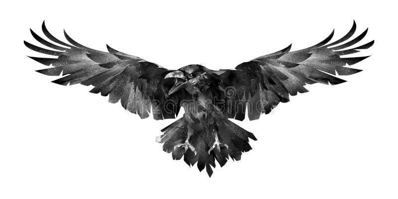 Bild av fågeln det korpsvart framme på en vit bakgrund vektor illustrationer