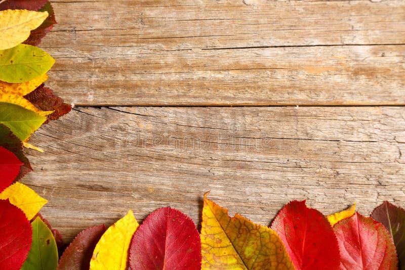 bild av höstsidor över trätexturerad bakgrund royaltyfri fotografi