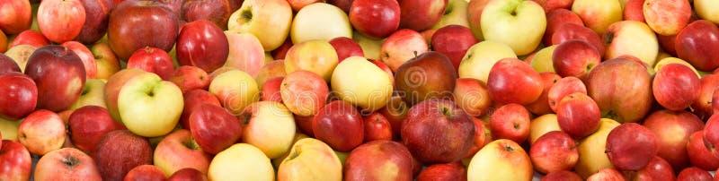 Bild av många mogna äpplen royaltyfria bilder