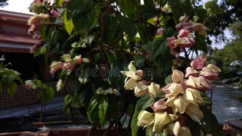 Bild av mina älskvärda blommor i tempel arkivfoto