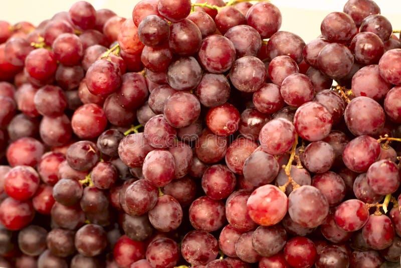 Bild av mogna saftiga röda druvor royaltyfria foton